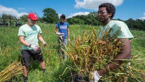 Badger volunteers sustainability
